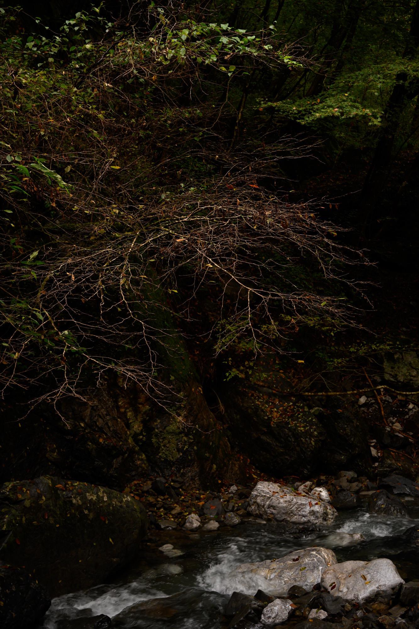 夕暮れの渓谷