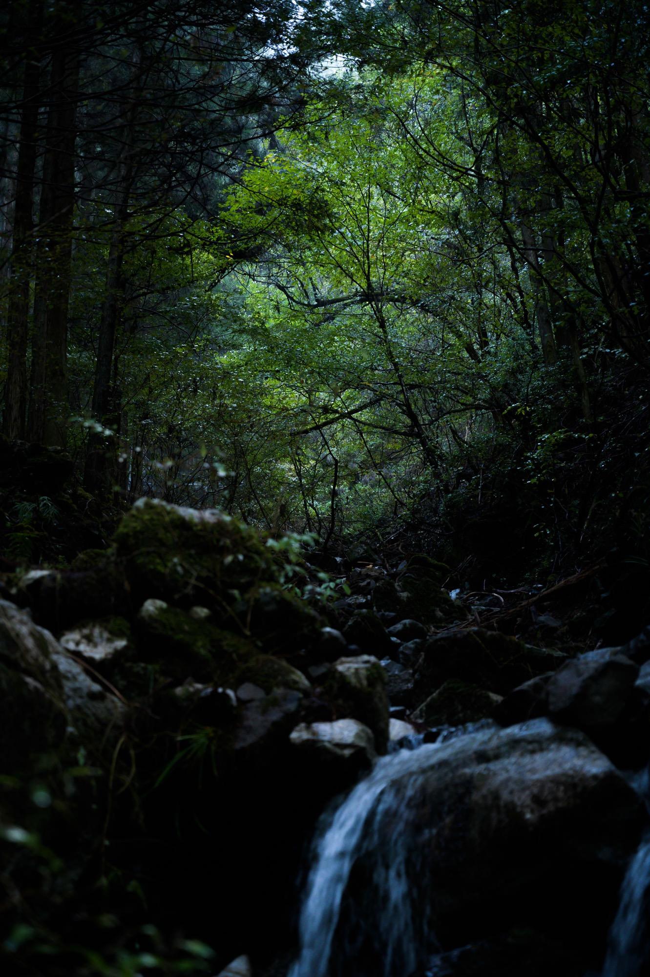 森の中の渓谷