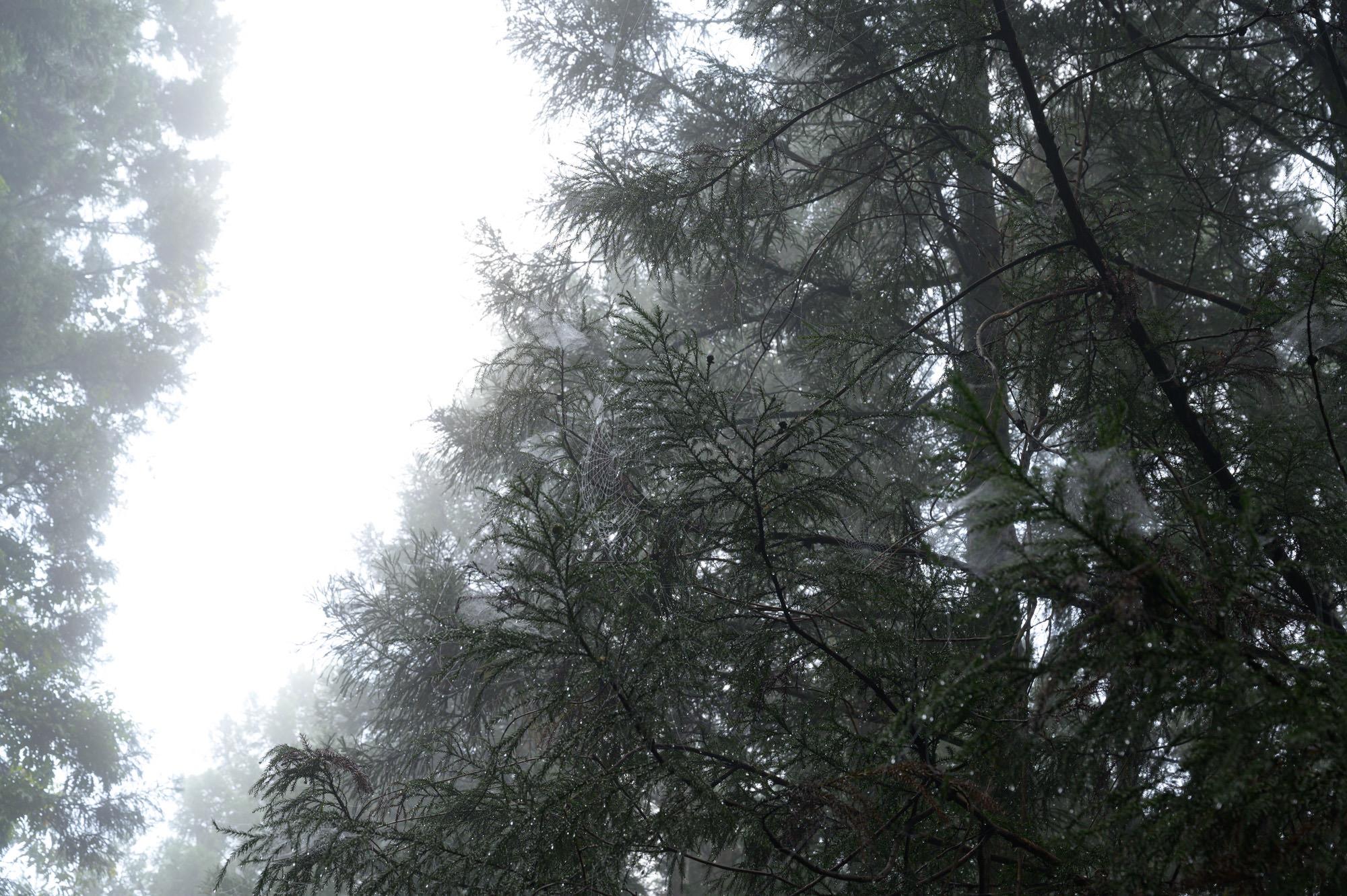 水滴と霧と蜘蛛の巣