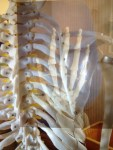 肩甲骨内側痛の原因はこんな所にあったのか!