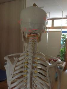 股関節痛(頭蓋骨)