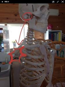 顎関節と五十肩
