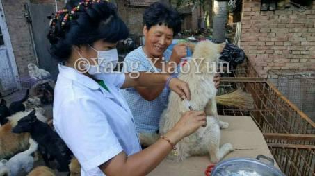 vet with Yang 3