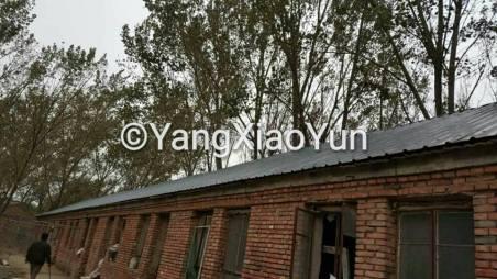 yangs-roof-1