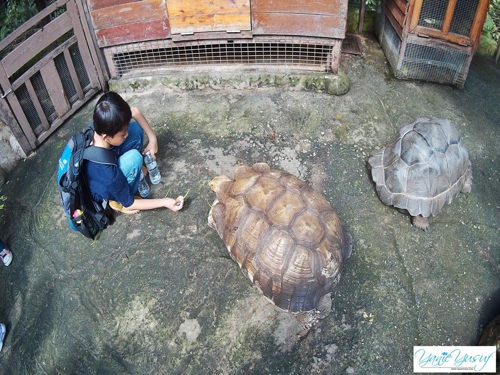 kl-tower-mini-zoo