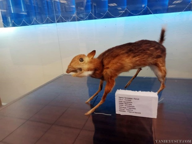 Muzium Zoologi UPSI Tanjung Malim