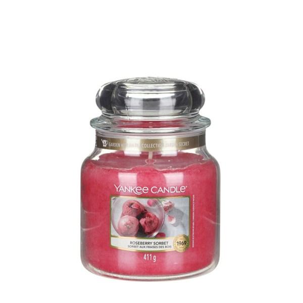 Roseberry-Sorbet-Medium