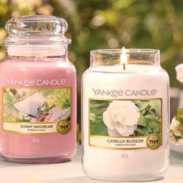 Camellia Blossom Display