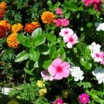 Yankton Benedictine Retreat flowers