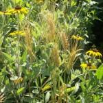 Pollinator Habitat 5 Year 2 Conservation Yankton Benedictines Sacred Heart Monastery Sisters Nuns