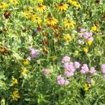 Pollinator Habitat 9 Year 2 Conservation Yankton Benedictines Sacred Heart Monastery Sisters Nuns