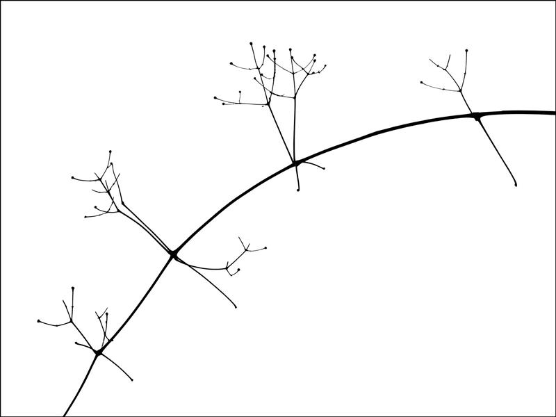 photo noir et blanc plante minimaliste silhouette graphisme