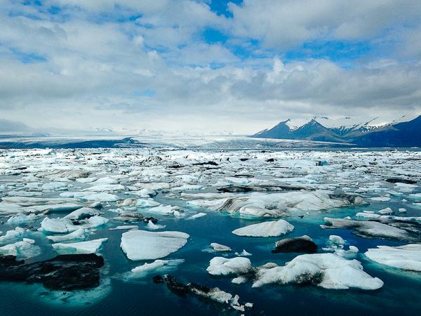 eider-iceland-12
