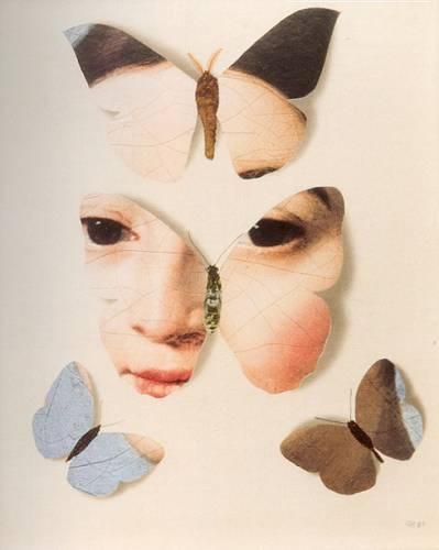 Papillon 61