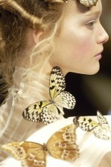 Papillon 17