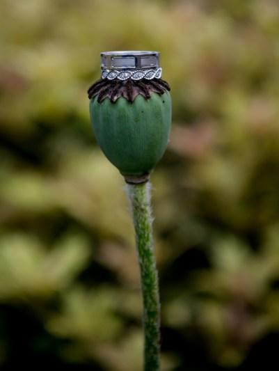Jewels (3)