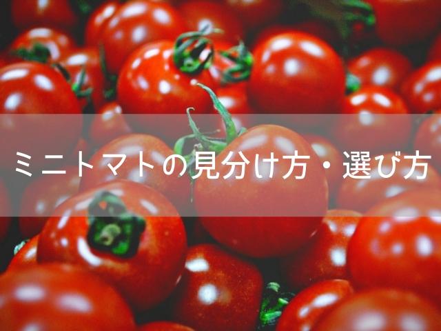 トマト しわしわ ミニ
