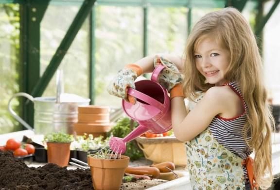 Sebze yetiştirme önerileri