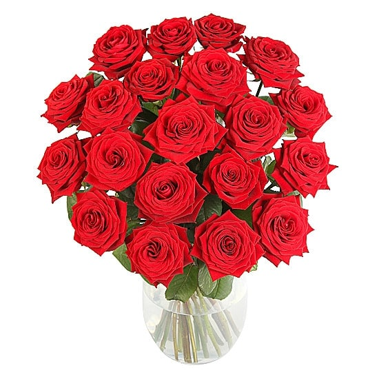 20-Ultimate-Red-Roses