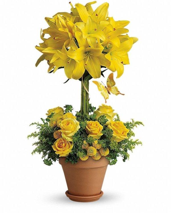 Yellow-Fellow
