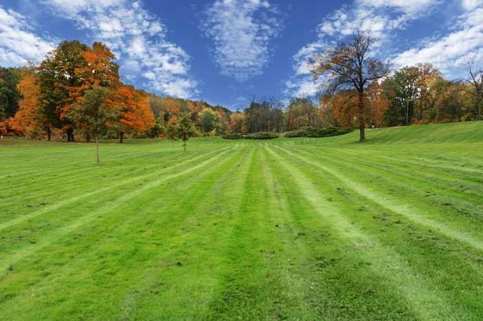 Fall through spring lawn diseases