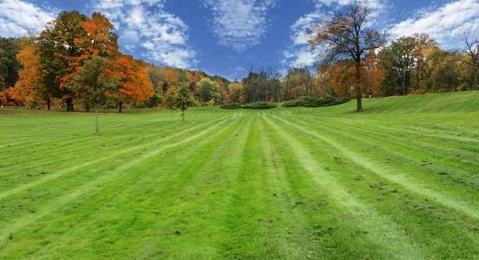 Fall through spring lawn diseases