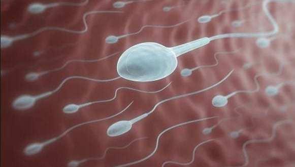 semen coronavirus covid 19