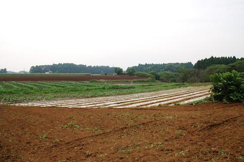 野菜の作り方 肥料の与え方 元肥