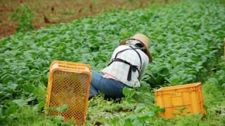 野菜の収穫の時間は、いつがいい?