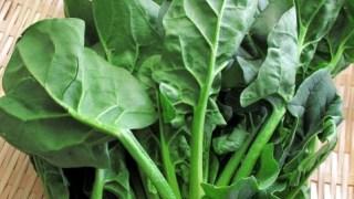 野菜の作り方 ホウレン草の作り方