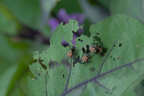 家庭菜園でできる病害虫予防策