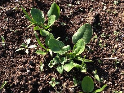 家庭菜園の雑草対策