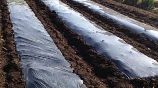 家庭菜園の雑草対策は?