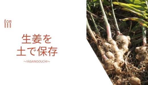 生姜の保存方法 農家の土付きのやり方や野菜の貯蔵方法