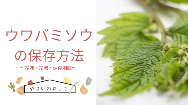 みず 山菜 レシピ