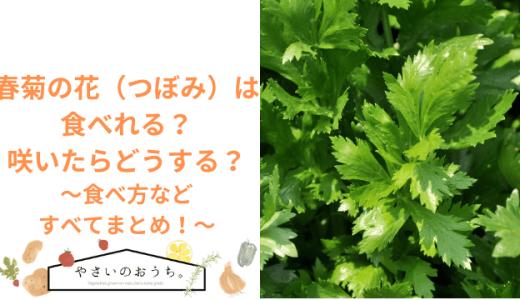 春菊の花(つぼみ)は食べれる?咲いたらどうする?食べ方まですべてまとめ!