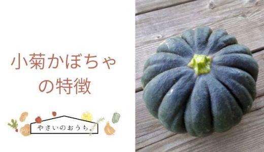 小菊かぼちゃの特徴や旬の時期!味は上品な甘さとネットリ系