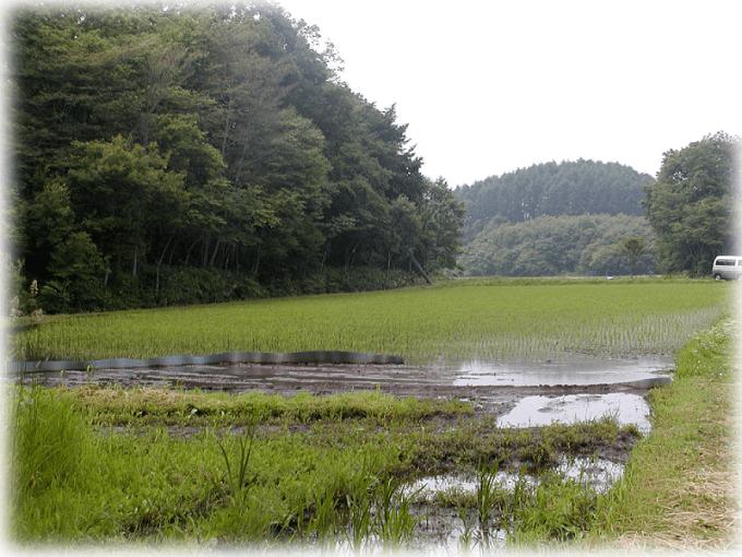 6月の田2反