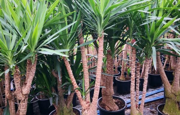 Yuk s01004 - سلة نباتات مشكلة كبير