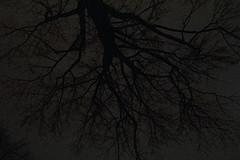 night-small.jpg