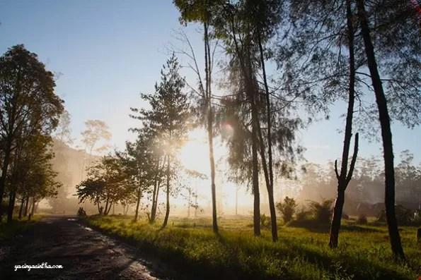 morning view, rancaupas, traveler , travel , ciwidey