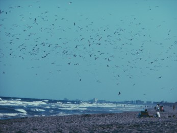 So Many Birds in a Fraction of The Sky