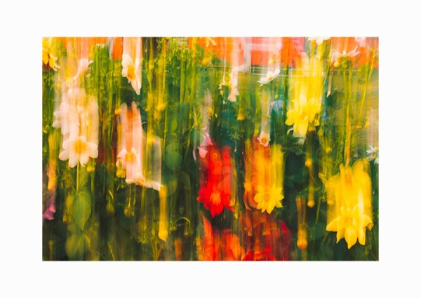 Abstract Flowers Finer Art Photo Print