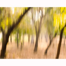 Abstract Trees Fine Art Photo Print