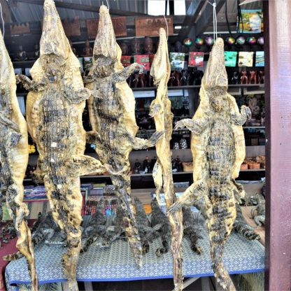 Siamese crocodile skins for sale in a souvenir shop on Tonlé Sap, Cambodia