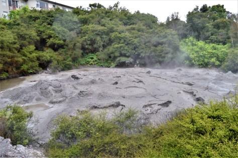 Boiling Mud Pool in Te WhakarewarewaGeothermal Valley
