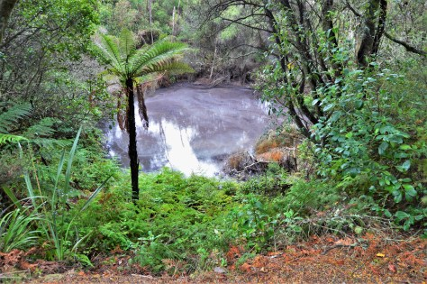 A pond with water from thermal activity in Te Puia near Roturoa, New Zealand