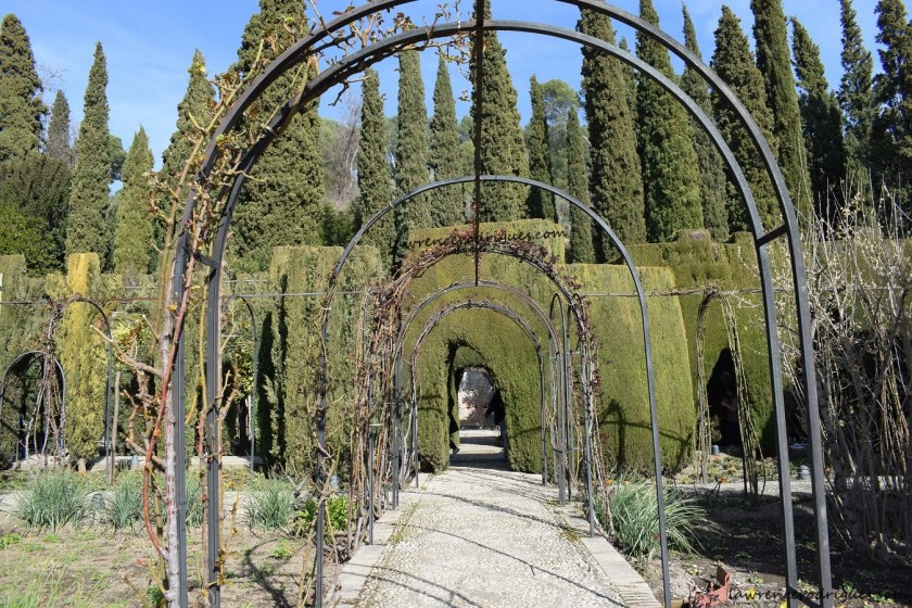 Cypress tree arches in the lower gardens of the Generalife in Granada, Spain