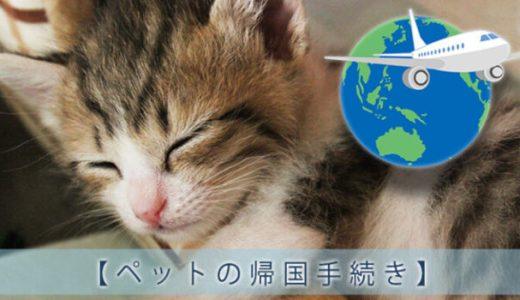 ペットの本帰国手続き|海外から猫を連れて帰るには