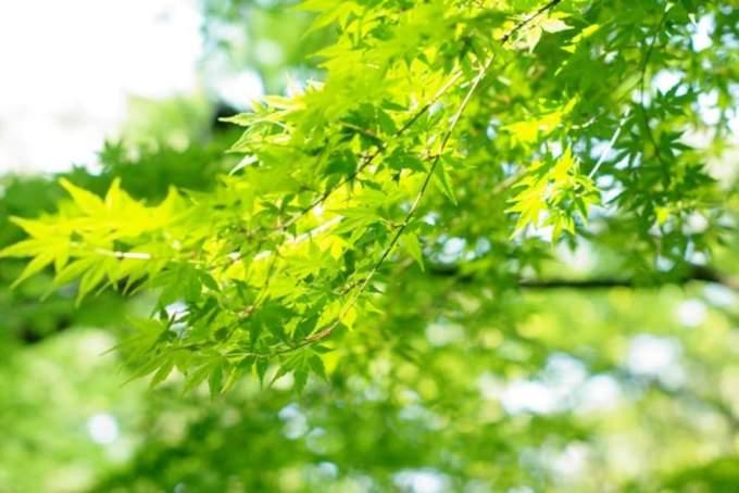 『春夏秋冬』四季の英語表記と1月~12月の英語表記